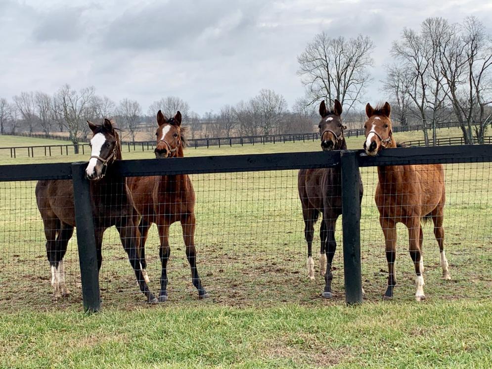 Hester Equestrian Weanlings